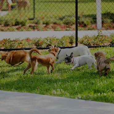 Large Dog Park at Pine Cove Apartments